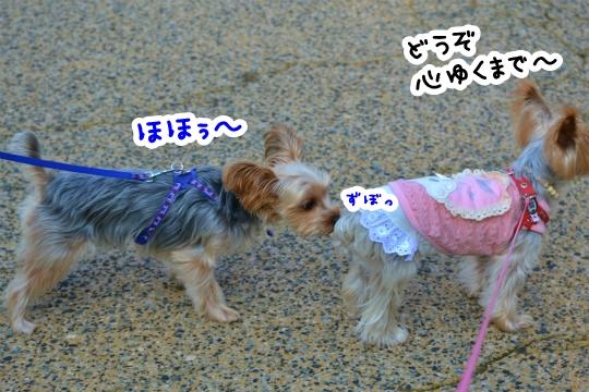 ラピスくんと初デート (3)