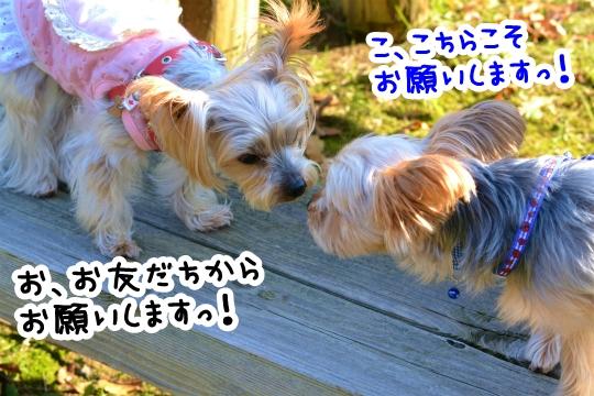 ラピスくんと初デート (5)