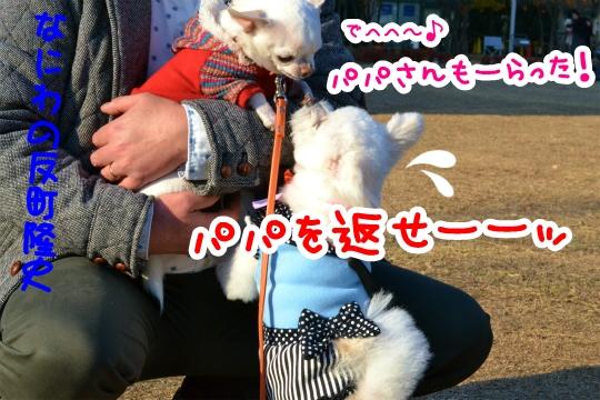 わんわんマルシェ4 (3)