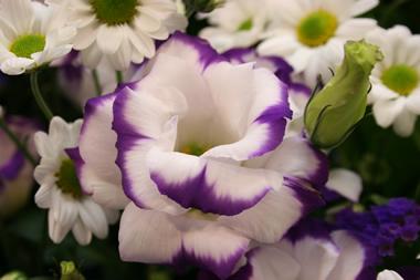 紫と青の祭壇
