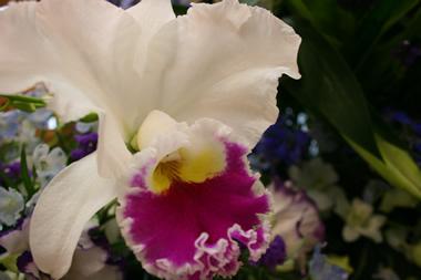 紫と青の花祭壇