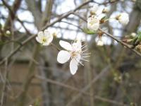 Spring has come1