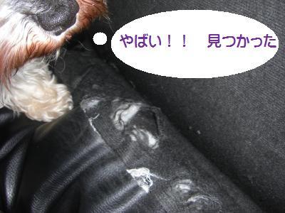 CIMG0981_convert_20100331185759.jpg