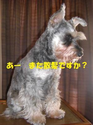 CIMG1064_convert_20100412140118.jpg