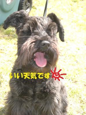 CIMG1188_convert_20100430073909.jpg