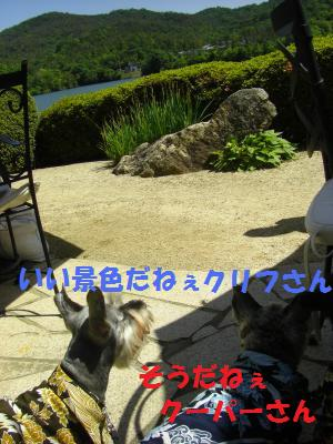 CIMG1339_convert_20100530195311.jpg