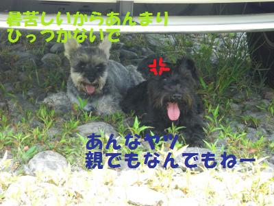 CIMG1472_convert_20100613180225.jpg