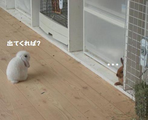 出ないの?