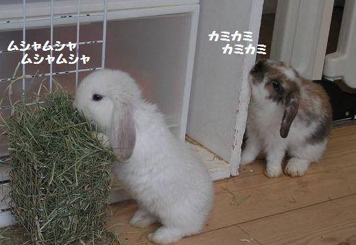 ウサギだよー