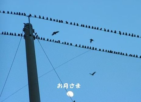 お月さまと鳥