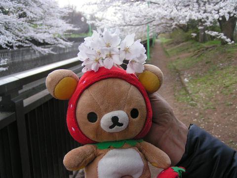桜の花と♪