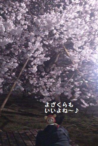 夜桜だよ~