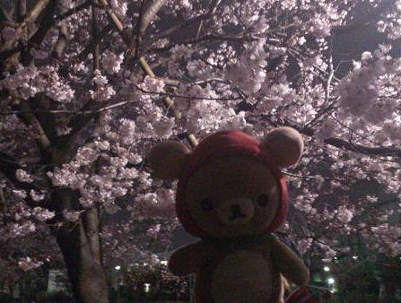 桜といちごクゥ