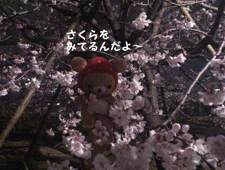 桜見てるの