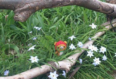 森の妖精♪