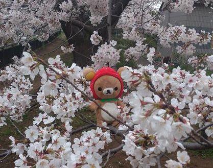 桜の木と記念撮影~
