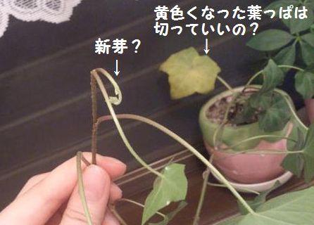 観葉植物~♪