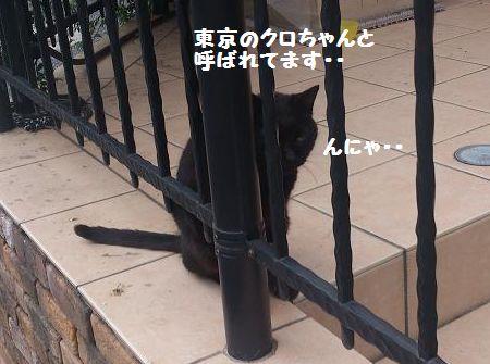 東京のクロちゃんだよ