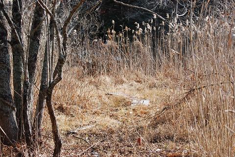 冬の長命湿地は