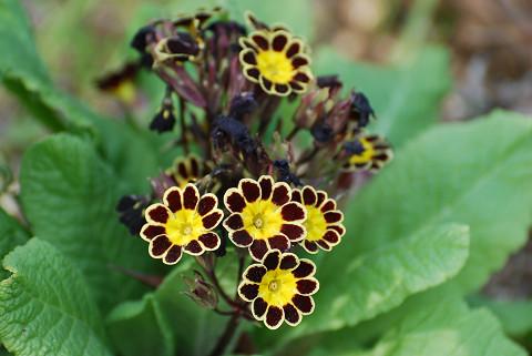 植え込みの花1