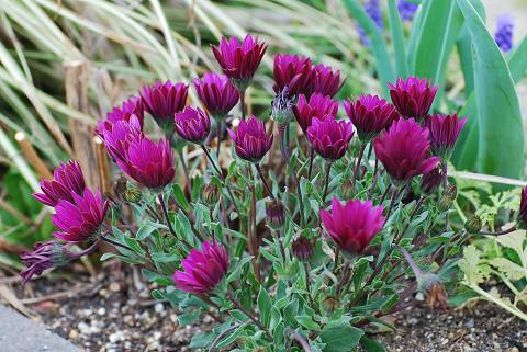 植え込みの花3