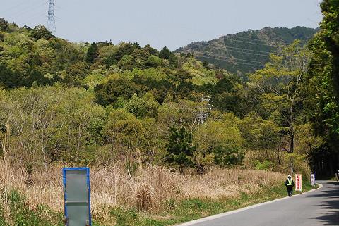新緑の山がもえている