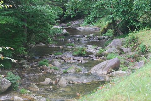 神越川の渓流