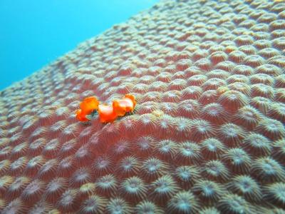ヒラムシ ジャパガ タオ島 ダイビング