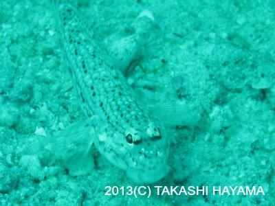 タオ島 ダイビング カメラ講習 2月8日