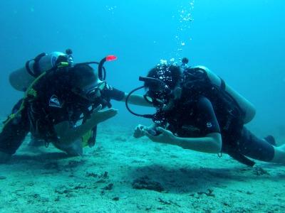 タオ島 ダイビング 中性浮力