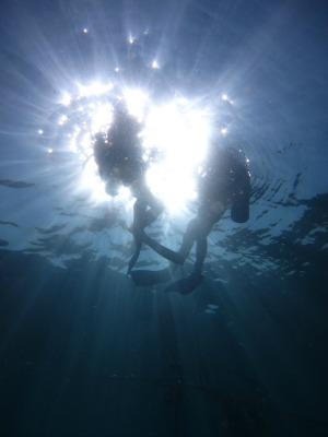 タオ島 ダイビング 目標物のない潜降