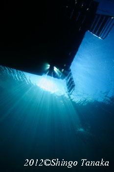 タオ島、ダイビング、水中写真