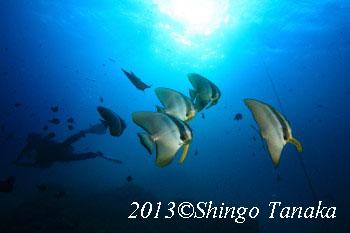 タオ島 水中写真2013