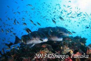 セイルロック、タオ島