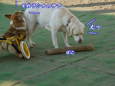 夢中 (3)