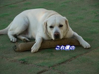 夢中 (7)