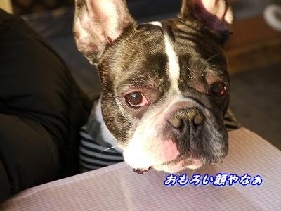 同じ顔 (3)