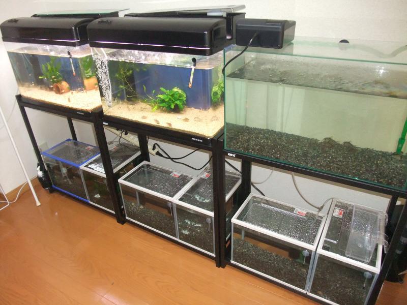 水槽部屋2