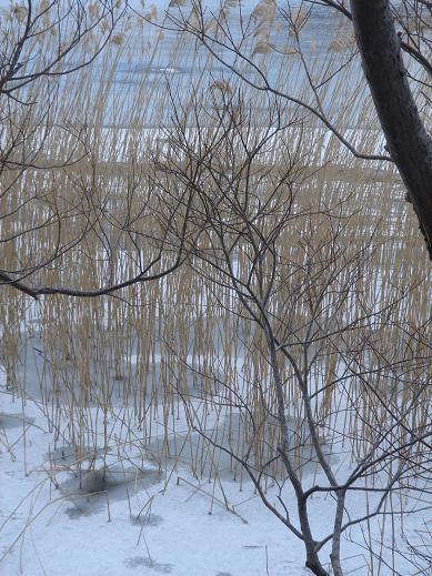 20131212久種湖4