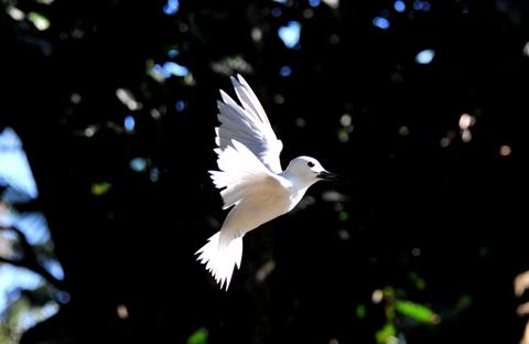 Anse Parc (3) Bird