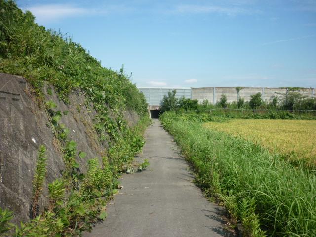 がいなへの道4