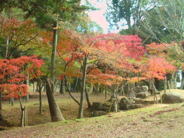 紅良公園の紅葉