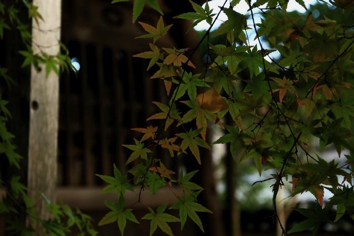 rengeji1411_05.jpg