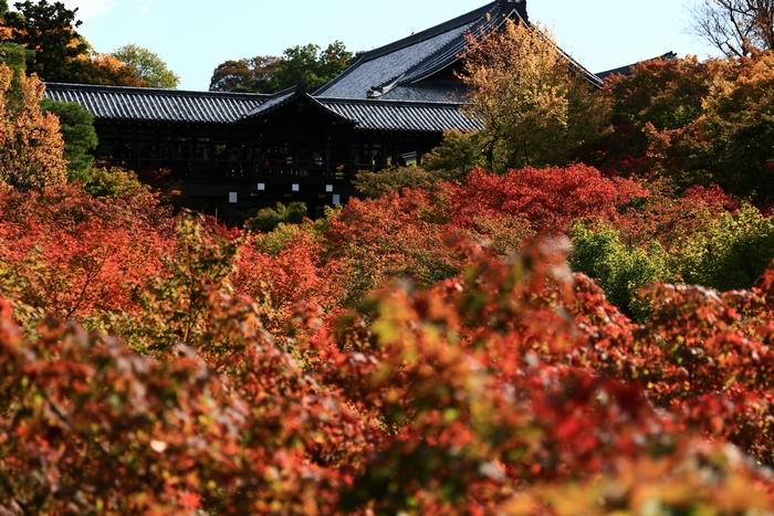 tofukuji1411_01.jpg