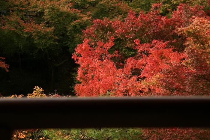 tofukuji1411_03.jpg