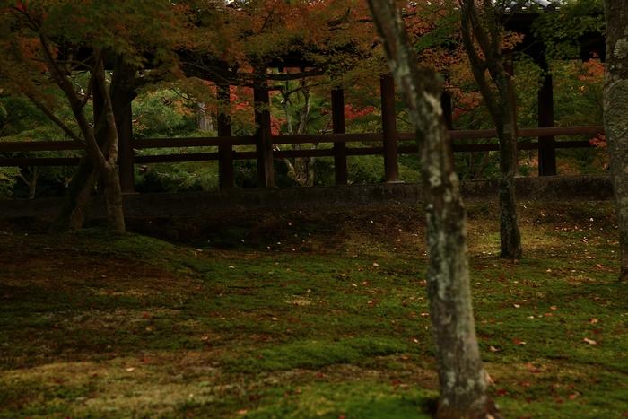 tofukuji1411_04.jpg