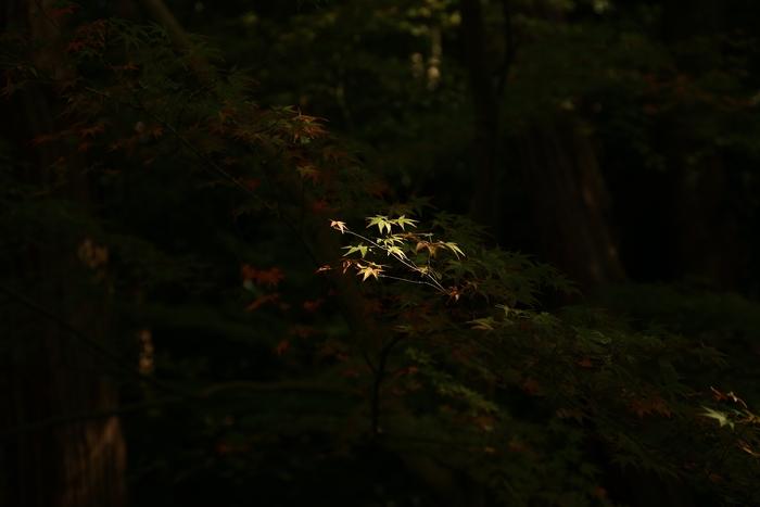 tofukuji1411_05.jpg