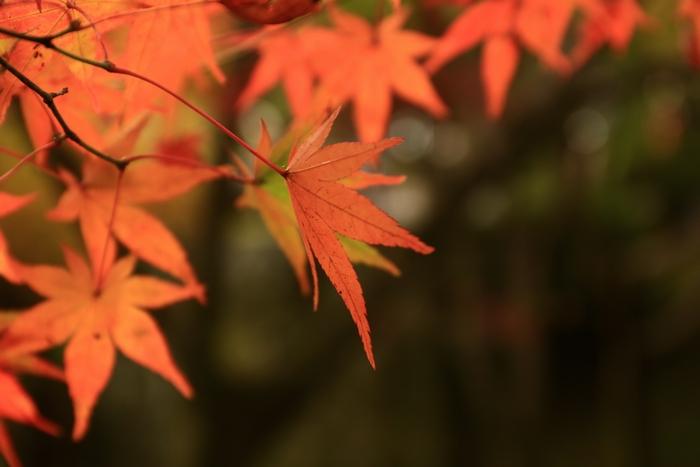 tofukuji1411_06.jpg