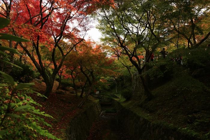 tofukuji1411_07.jpg