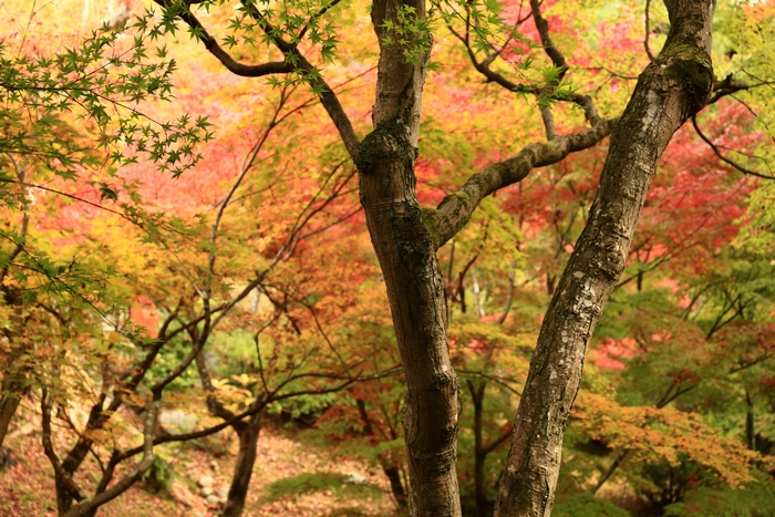 tofukuji1411_12.jpg